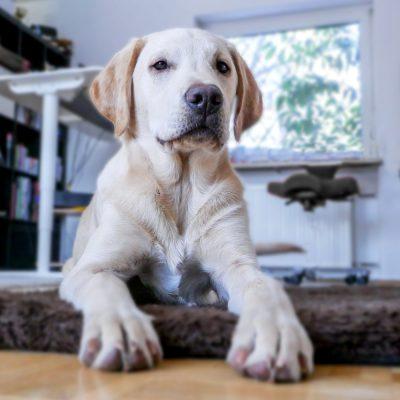 voorbeelden-sociaal-hondengedrag